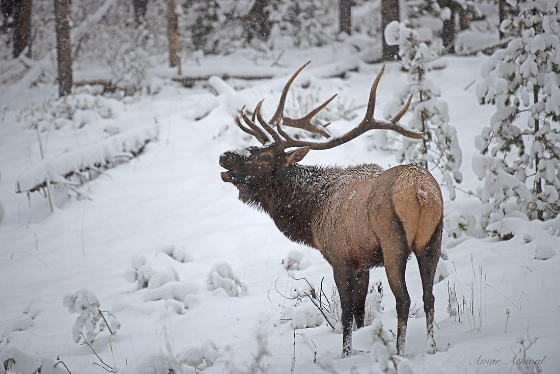 Elk 181002 Amar Athwal.jpg
