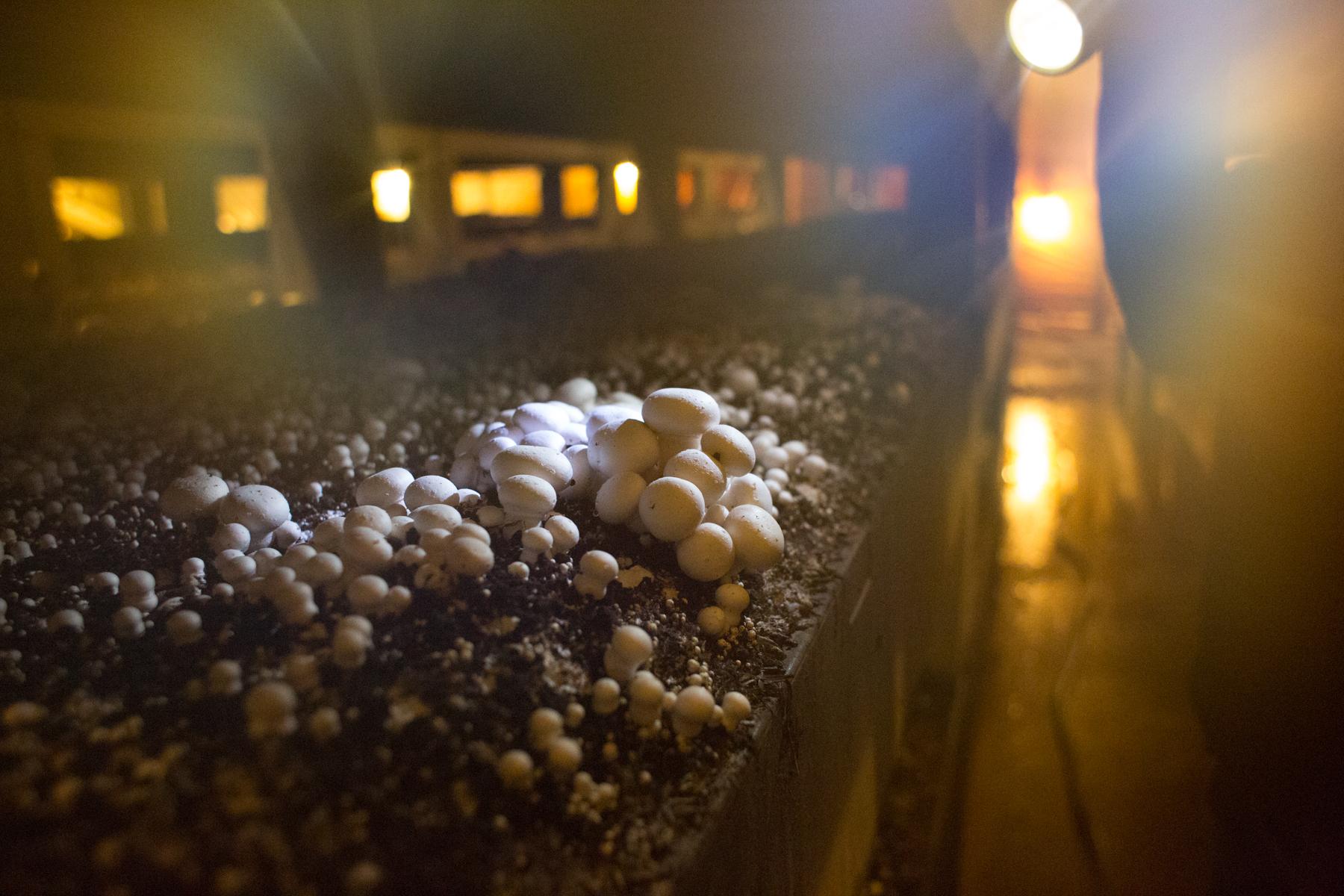 Mushroom_Farm-8.jpg