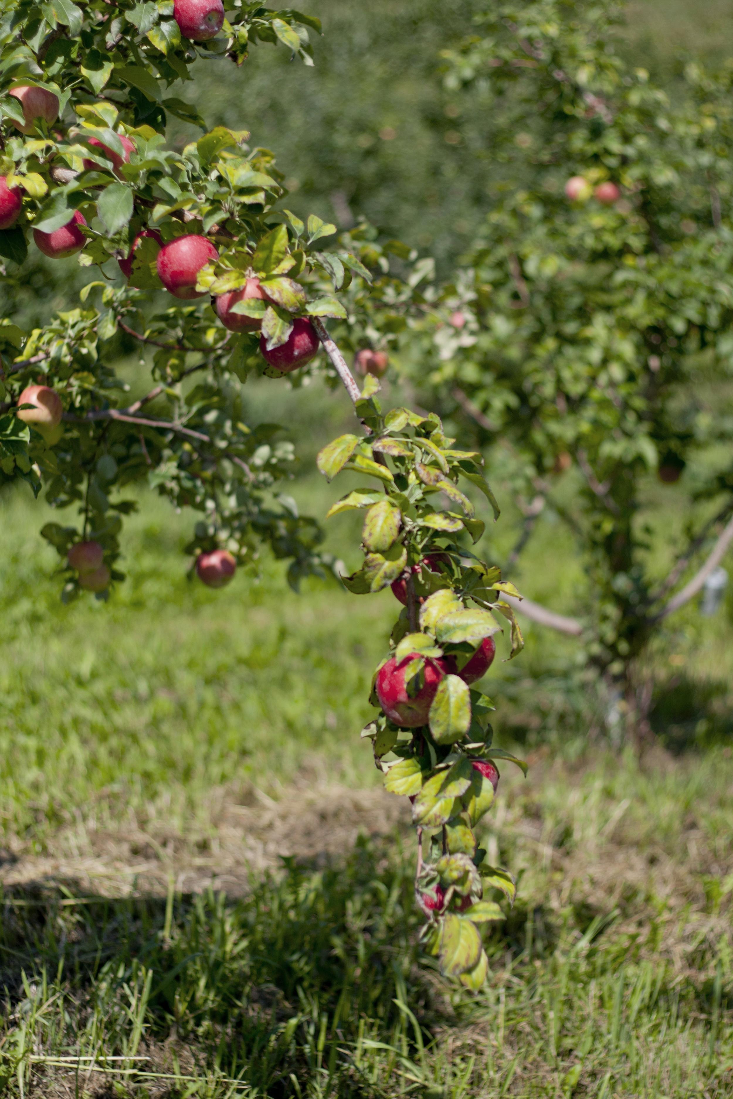 Hanging Branch.jpg