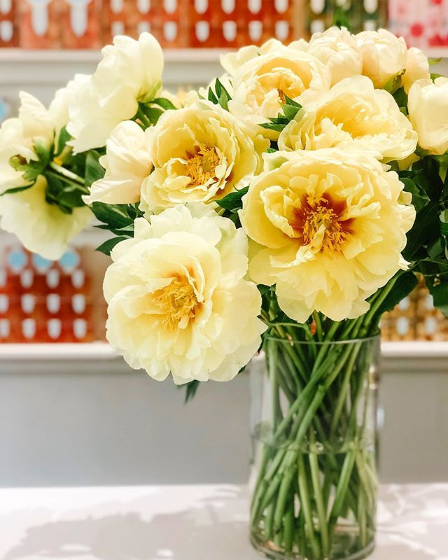 @poppyhoney check on the comment you posted.  GIVEAWAY!!! 💛well, this was a beautiful shipment today!💛 we'd like to gift 10 stems of these beautiful buttercup peonies to one of you. simply like this post, and share a little comment about how gorgeous you think they are & you'll be entered to win. this is going to be a fast little contest, so act swiftly. we'll select a winner tomorrow morning so you can enjoy them all weekend long. this contest also posted on our Facebook page, so keep your eyes on there, too. we have them to purchase in the shops so come and get them, they will not last long! #yegcontests #swishflowers #peonies *you must be able to pick up in one of our stores.