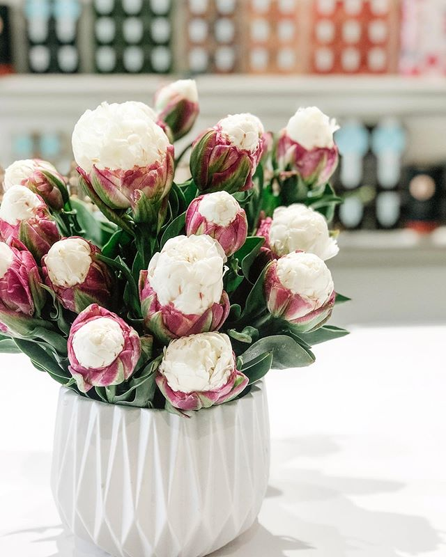 💕our annual ice cream tulip post, or as Lara called them today, 'cupcake' tulips💕 #icecreamtulips #cupcaketulips #swishflowers