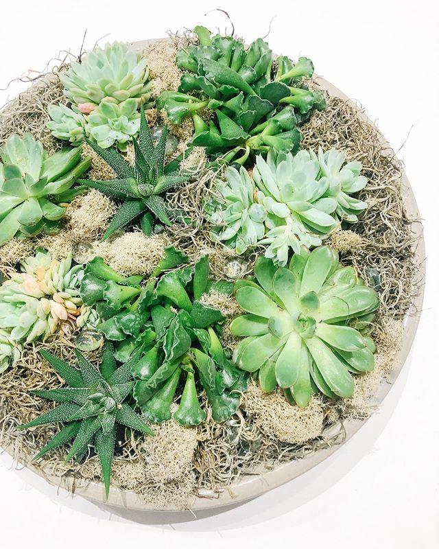 🌿swishy!🌿 #succulents #swishflowers
