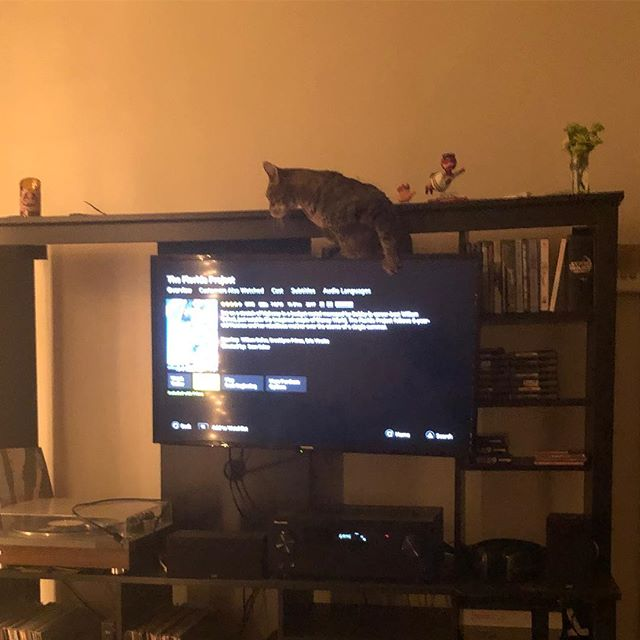 Yes he climbed up on the tv from the bottom shelf