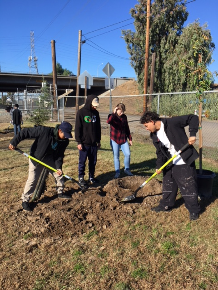 Youth dig site for tree planting