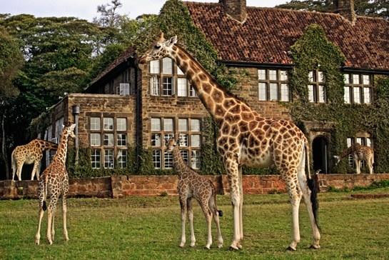 beyond giraffe manor - 1.jpg