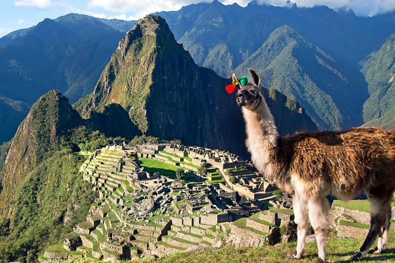 Machu-Picchu-llama.jpg