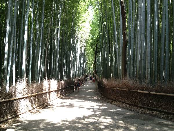 Those of you who watch films will recognize the Bamboo Forest.