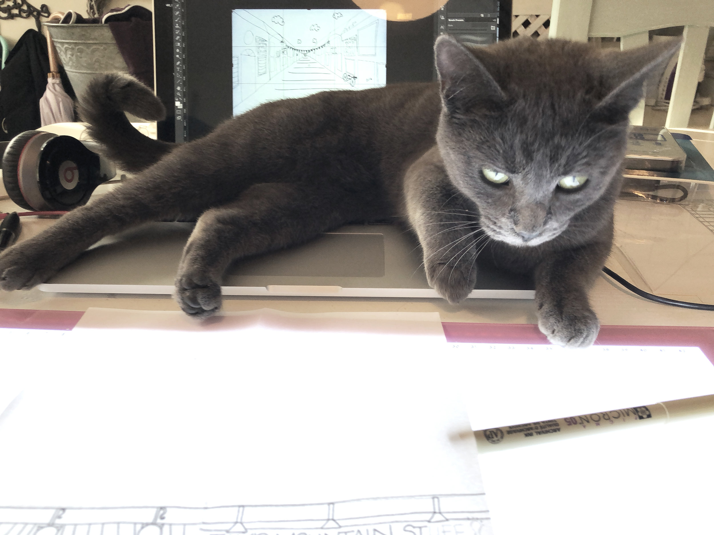 Dottie once again on the laptop | natalie palmer sutton | how to argue with a cat.JPG