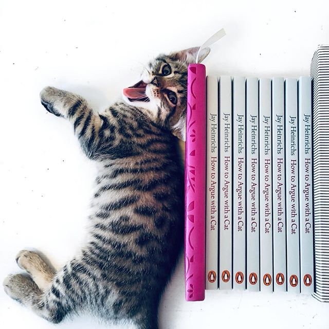 Treat yourself to a big smile😍. It can actually make you feel better!  It's nearly the weekend so there's a lot to smile about buddies! 🌼🐱🌼🐱🌼🐱🌼🐱🌼🐱🌼🐱🌼 #HowToargueWithACat #cat #cats #persuasion #smiling #lazycat #ilovemycat #kitten #kittens #book #bookworm #naughtykittens #crazycatlady #catsandbooks #newkitten #ilovebooks #chat #neko #gato #gatto #ilovemycat #crazycatladyproblems #catsofinstagram #catsandbooks #booksandcats #booksofinstagram #jayheinrichs #nataliepalmersutton