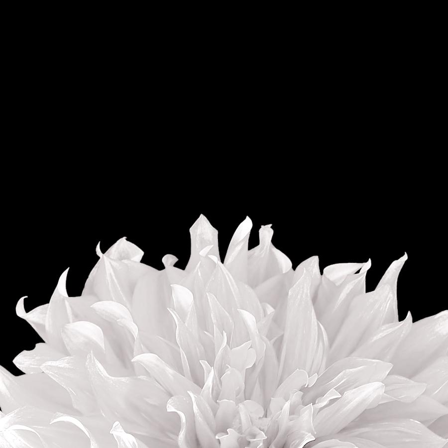 floral_white.jpg