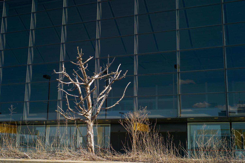 """The Last Tree (Portfolio """"Mirabel Oublié"""")"""