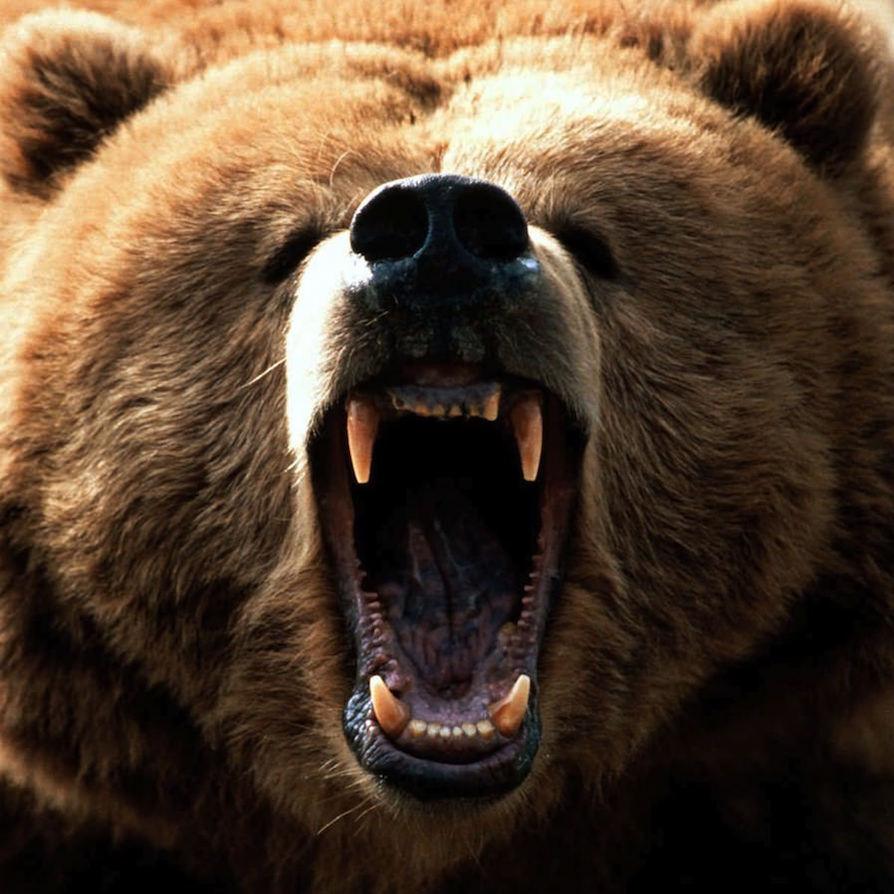 About_Mama_Bear.jpg