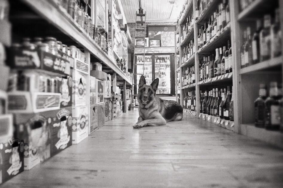 Liquor Store Dog (Apalachicola)