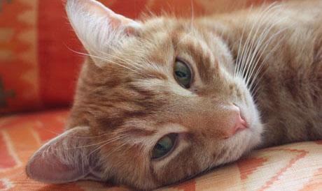 Stock-picking cat Orlando