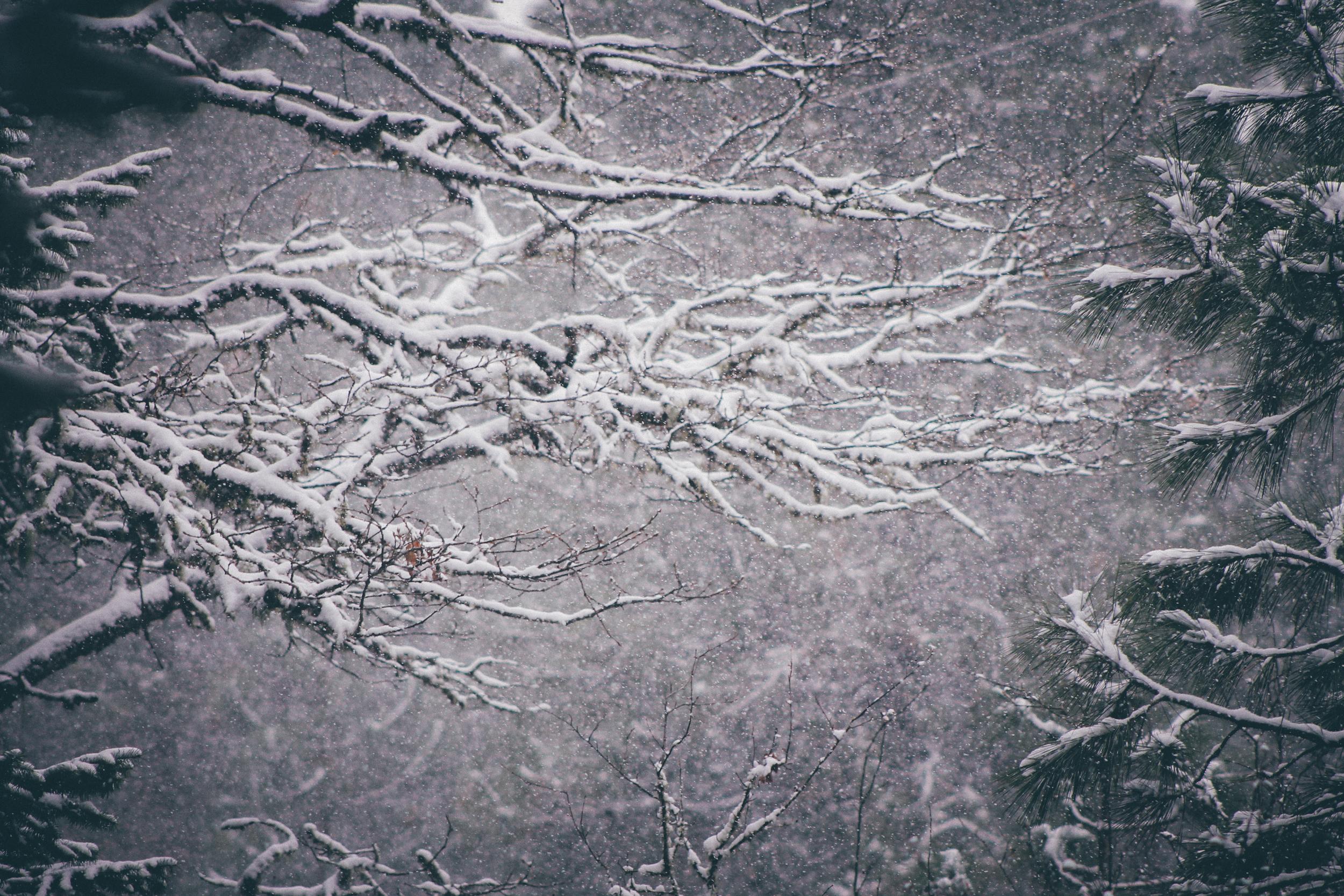 winter Portrait | The Picture People LA | Christi Childs (50 of 106).jpg