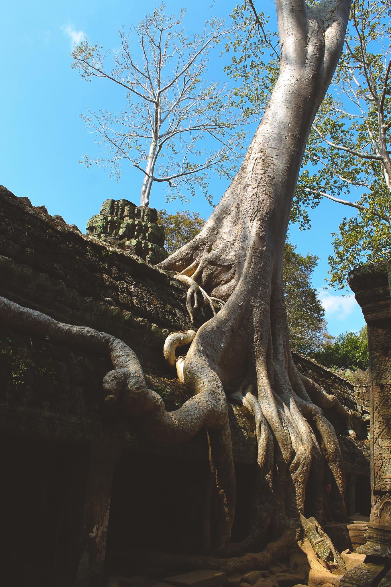cambodia blog (18 of 34).jpg