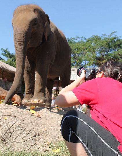 Lindsay photographing elephants