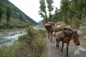 Trekking in the Himalayas