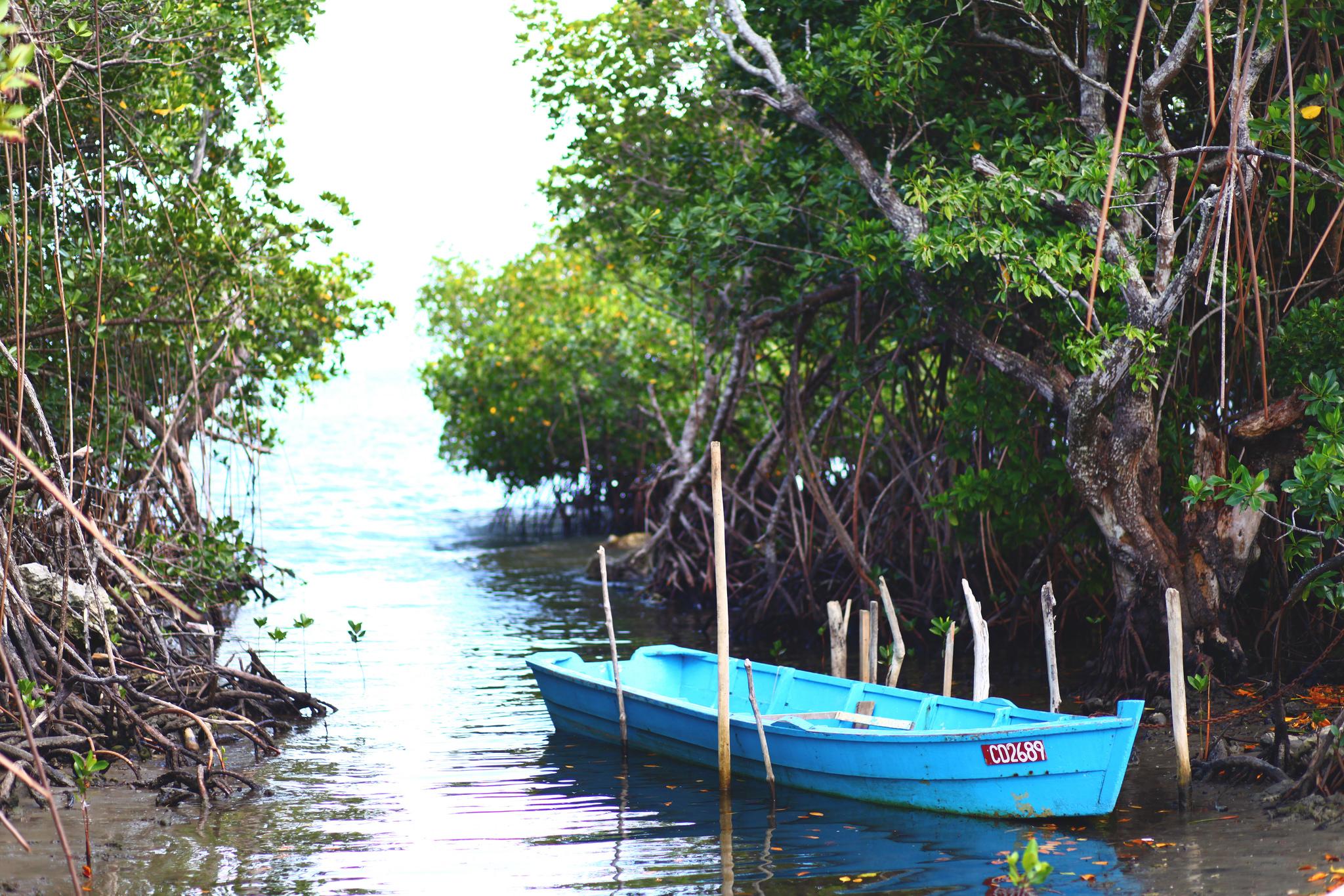 Walking around the mangroves in Suva.