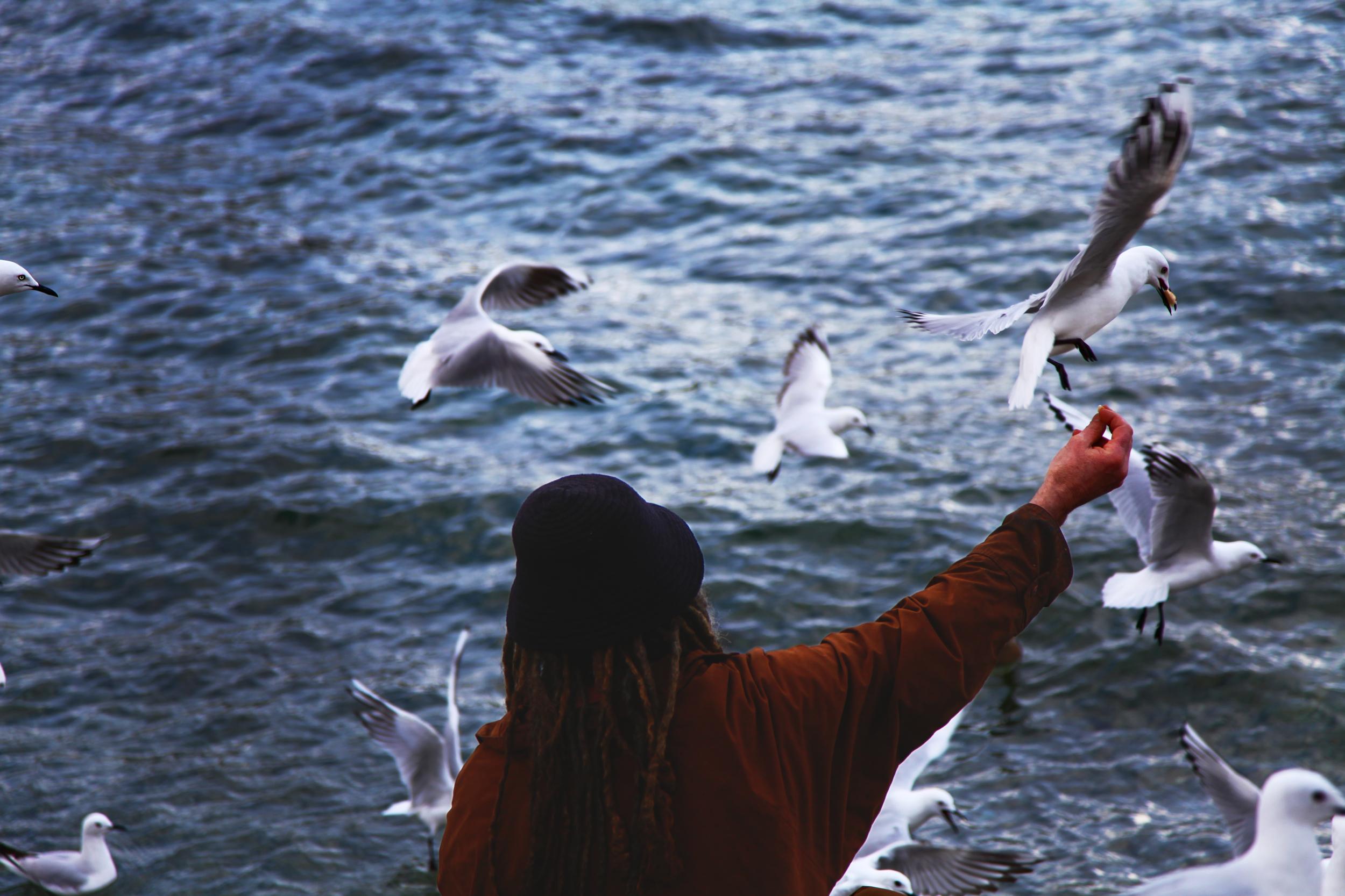 Feed the Queenstown birds