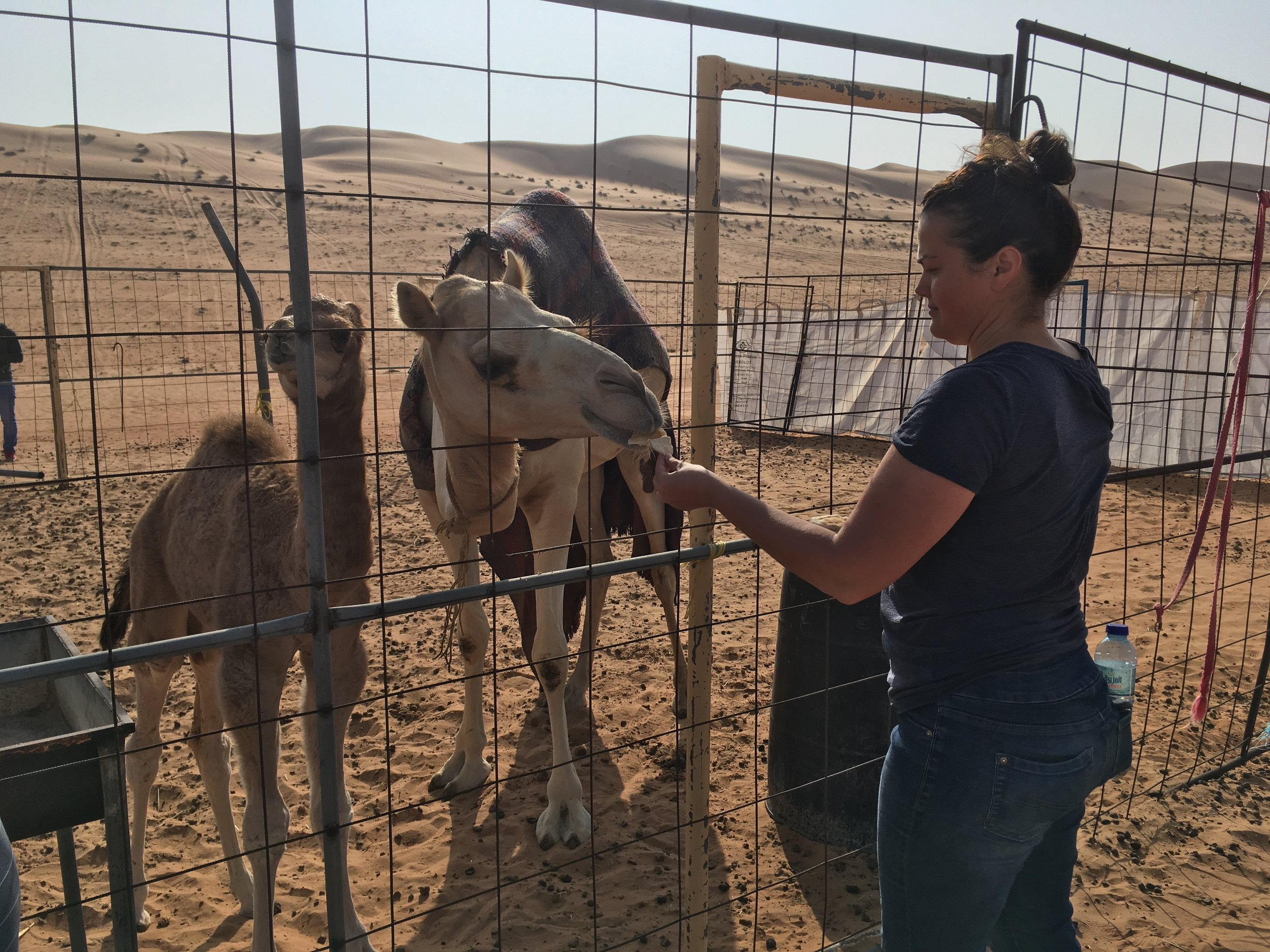 Apprehensively feeding the camels a little of yesterday's pita