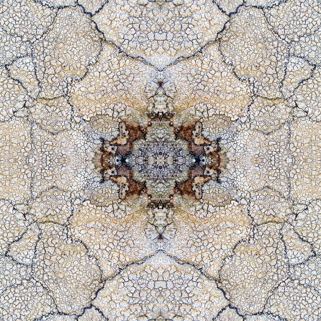 Of Lichen