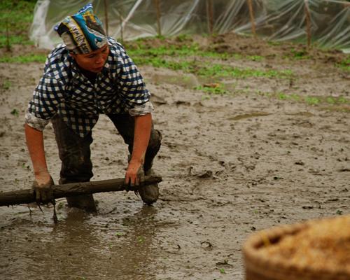 Alicia Morga rice field