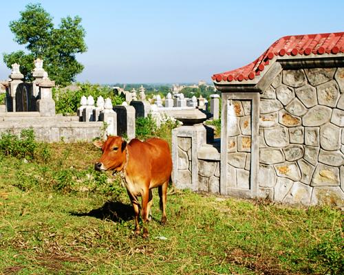 Alicia Morga Vietnam Tombs