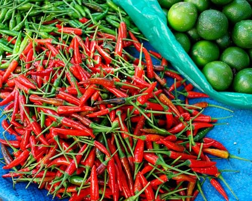 Alicia Morga Vietnam chile