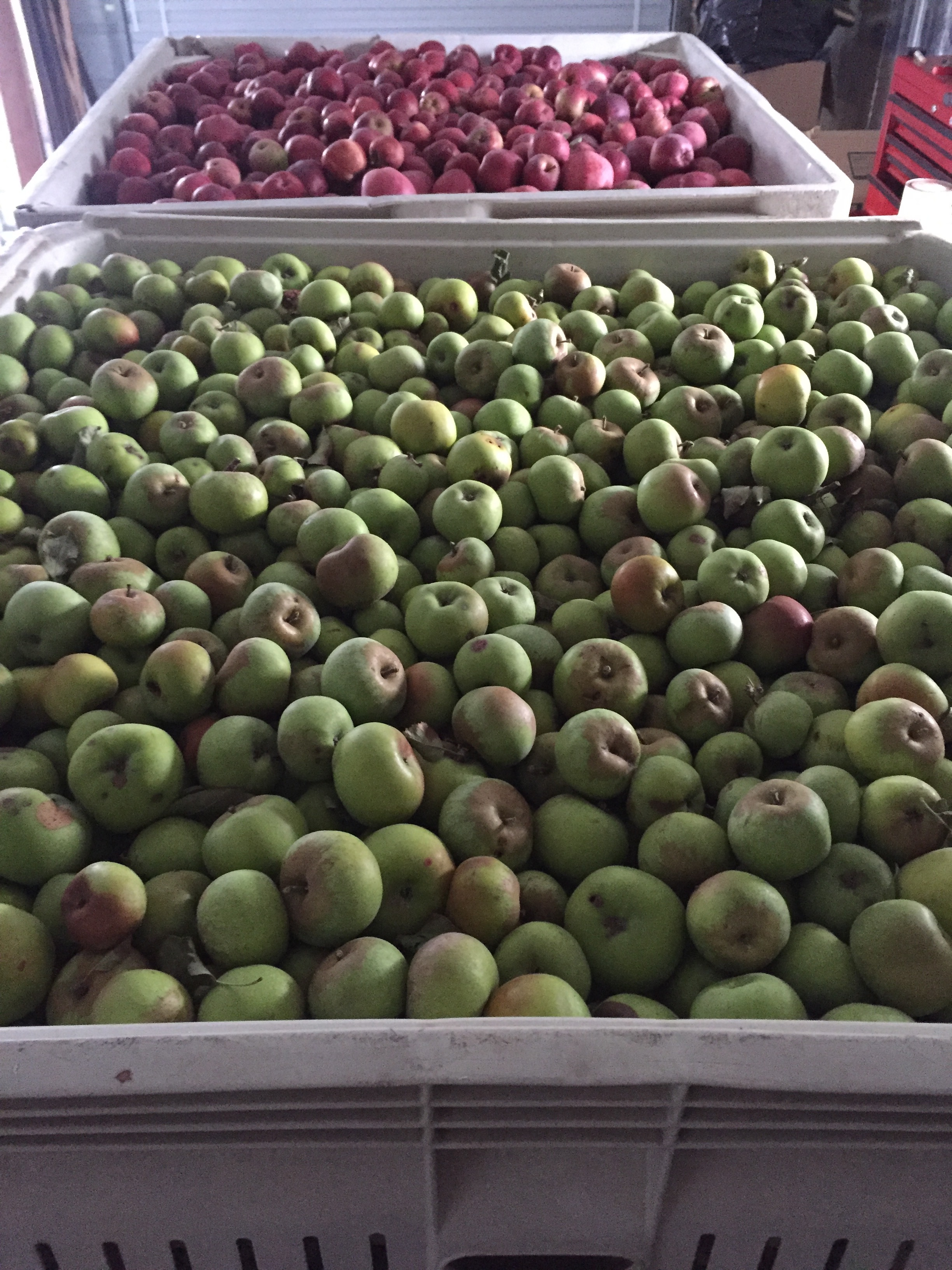 Apples for Donation