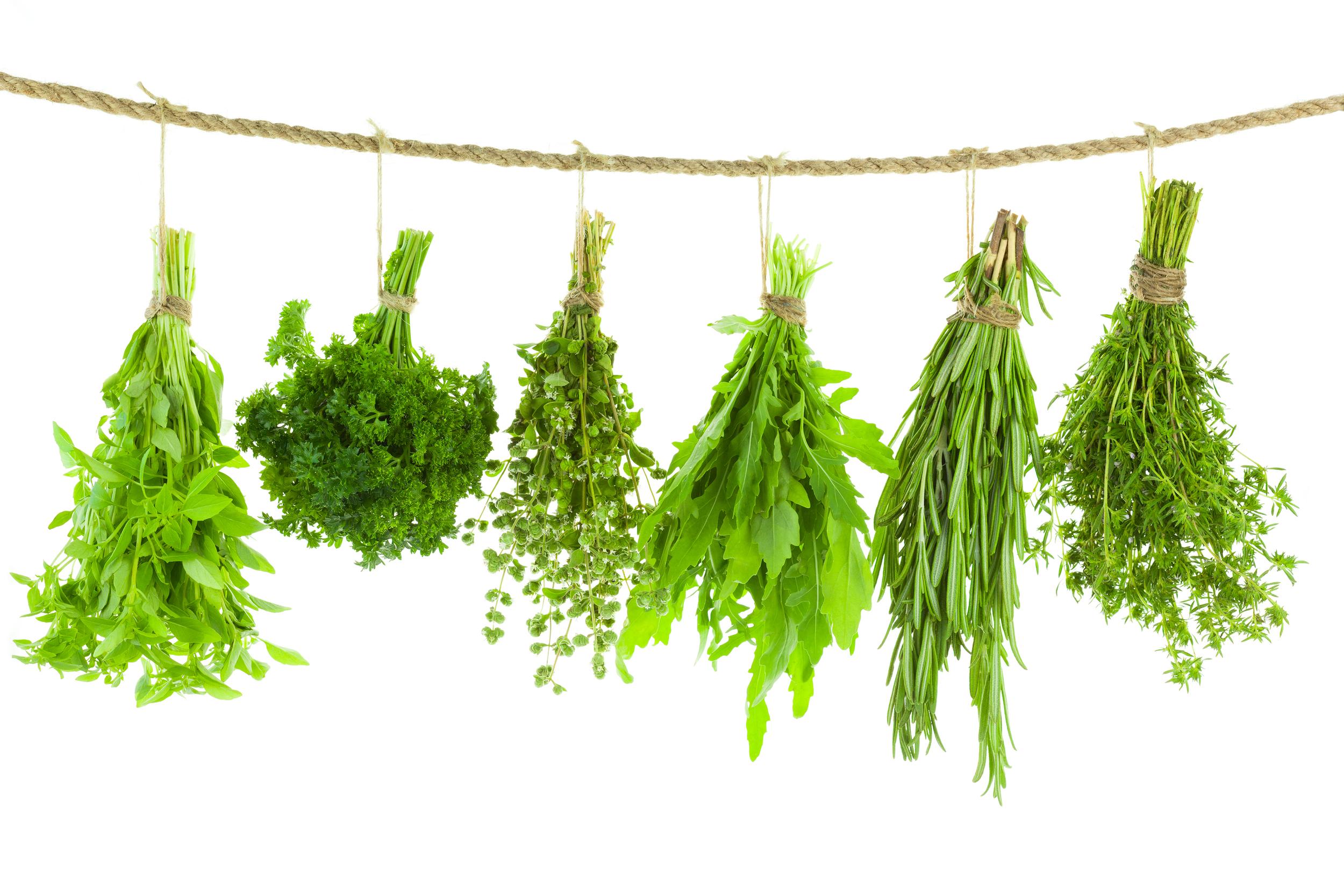 bigstock-Set-of-Spice-Herbs---medium sizeisolate-48567740.jpg