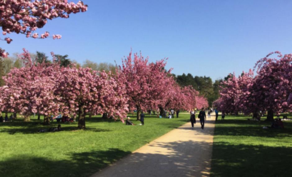 Sakura strolling (1).png