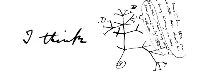 This early sketch by Darwin has branches going out to all sides, suggesting it was not inspired on the image of a tree.