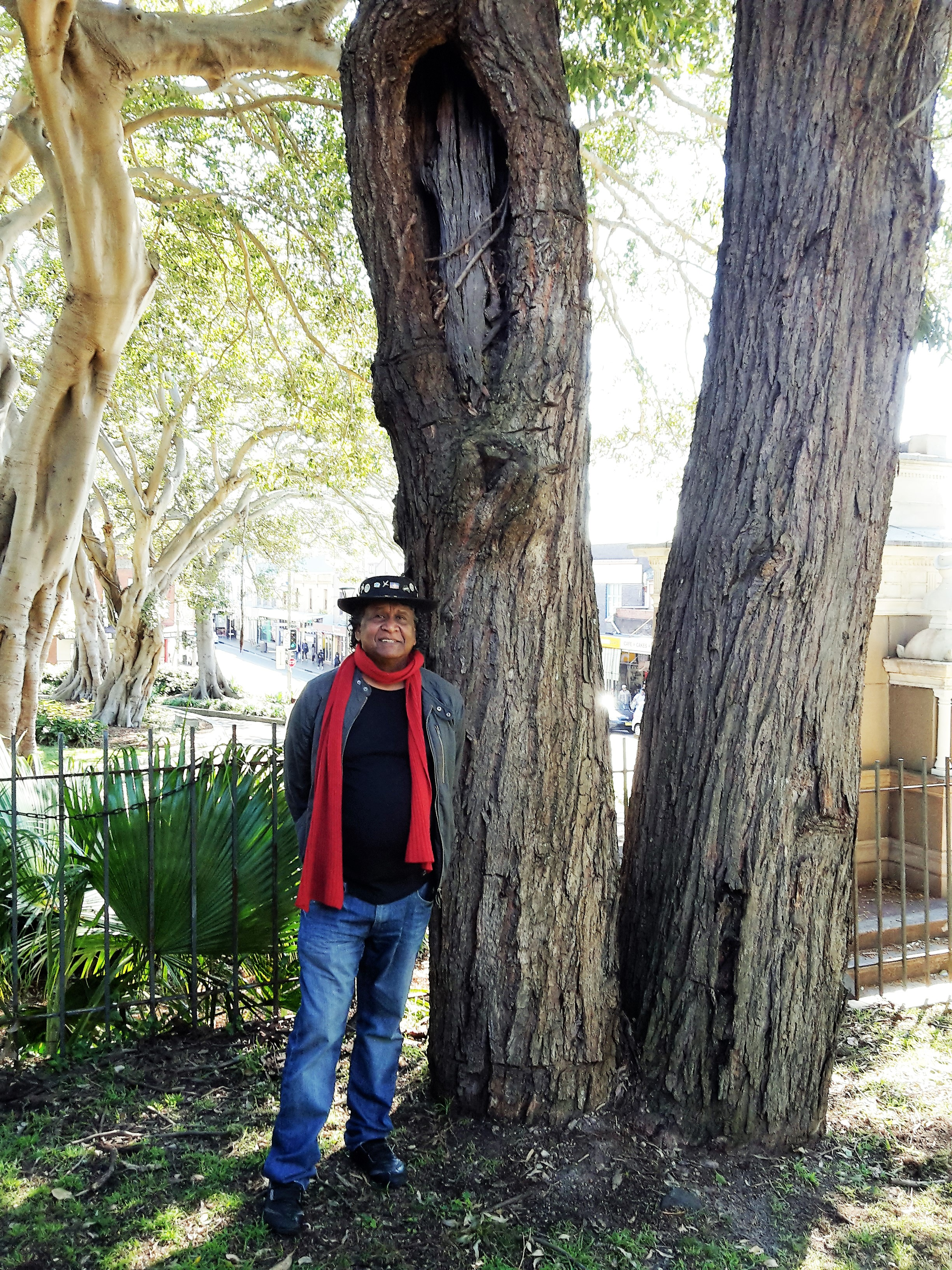 Ray Minniecon from the Babana Aboriginal Men's Group and the scarred tree ministries, pictured with the tree in Glebe.