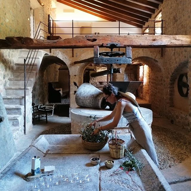 Doing what we love most. #experiences #culinaryisland #oliveoil #tramuntana