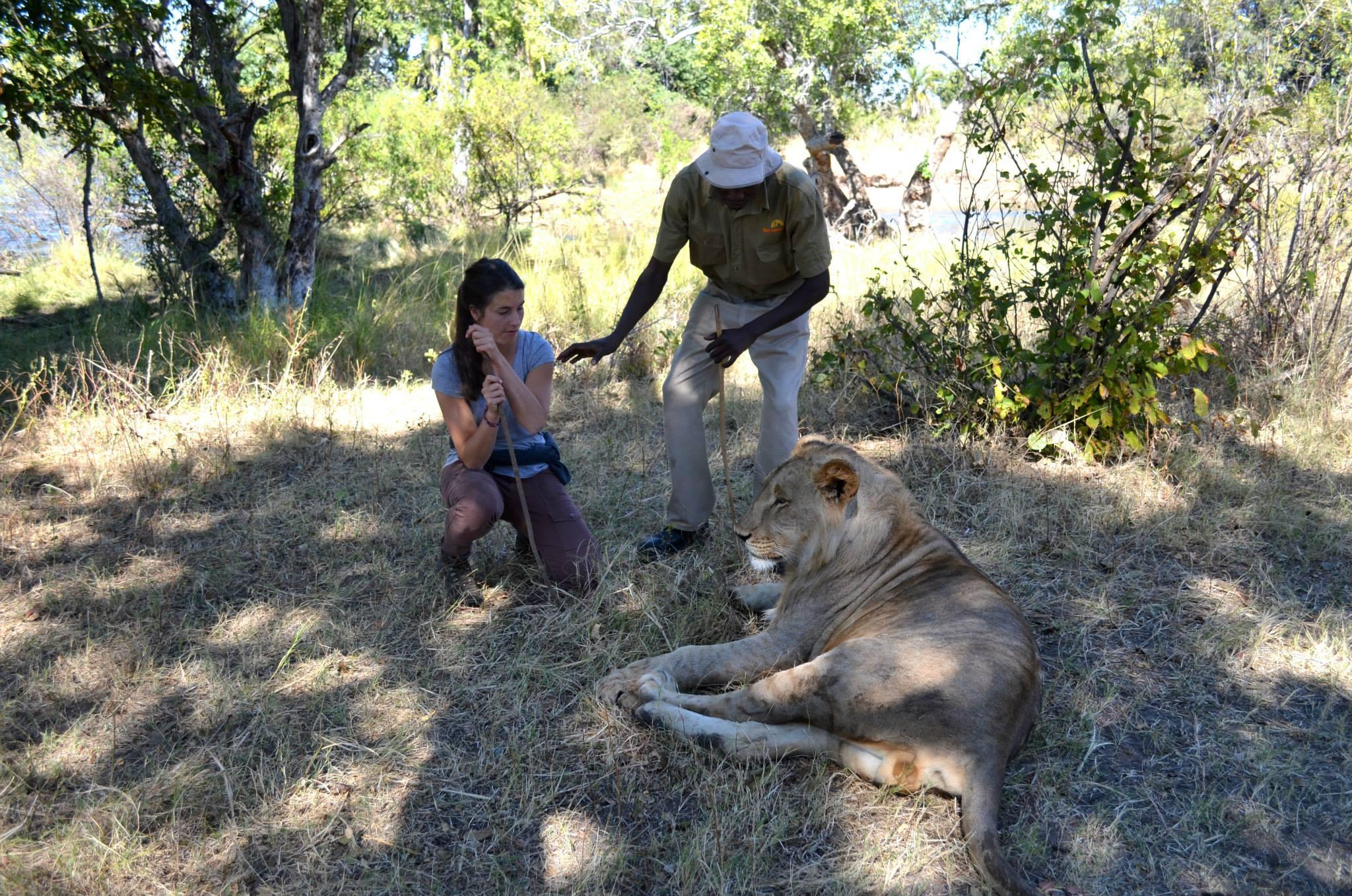 Afrique-Sarah lion2
