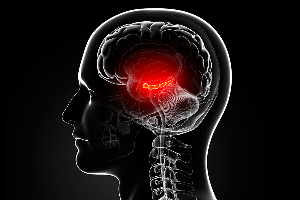 hippocampus-inline.jpg
