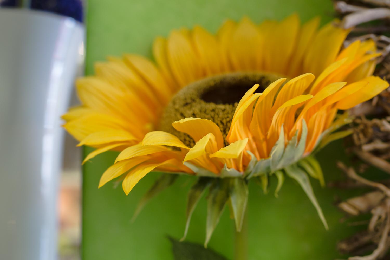 Fleuriste 50mm worked-82.jpg