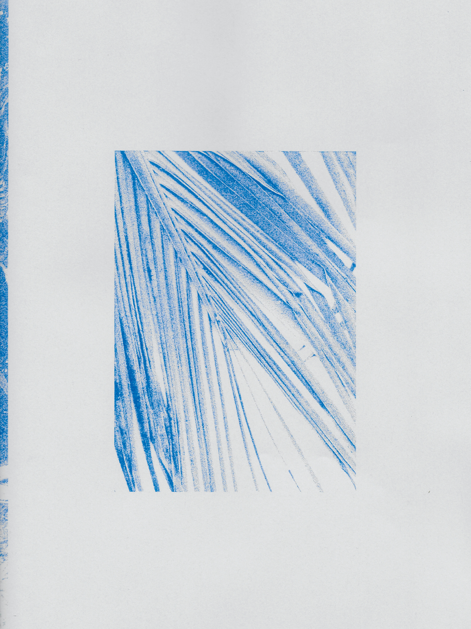 Zinzi de Brouwer Palm Riso Print.jpg