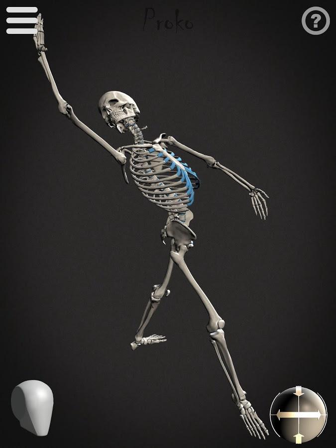 Skelly App Posed Skeleton