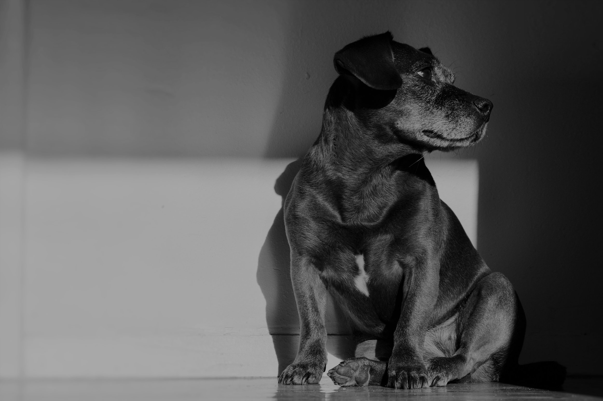 We Come to You - And work with you and your dog in the environment where the behavior challenges occur.