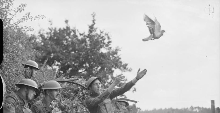 British troops release carrier pigeon during WWII ( Imperial War Museum: Lt EG Malindine )