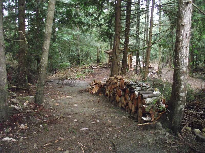 WoodPileOnpath-sm.jpg