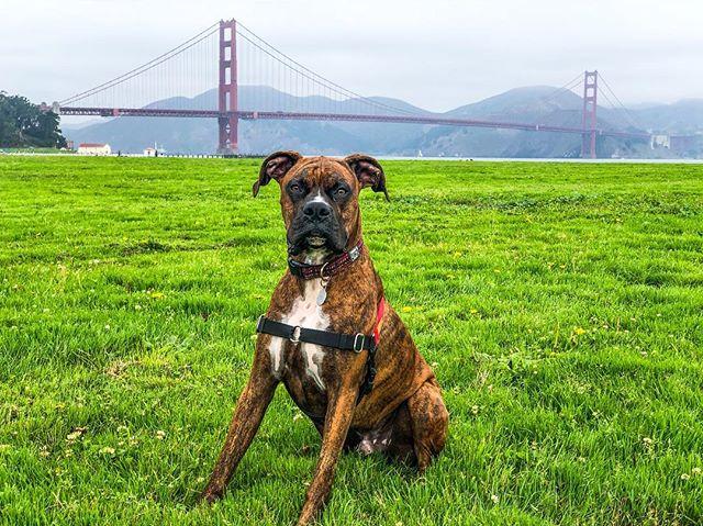 Channeling His Inner Danny Tanner. Crissy Field, San Francisco, CA #marinamilo #fullhouse #bobsaget #crissyfield #ggnra