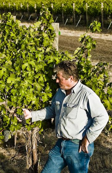 Tom in vineyard.jpg