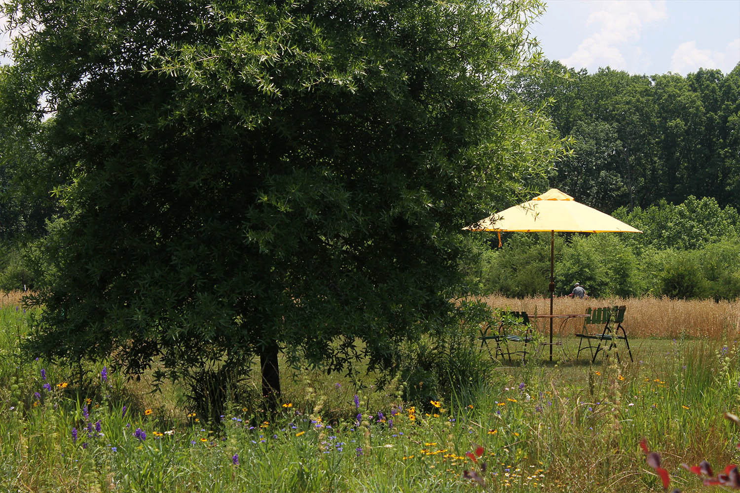 wild-flowers-under-a-tree-by-a-yellow-umbrella-table-chairs-IMG_1427.jpg