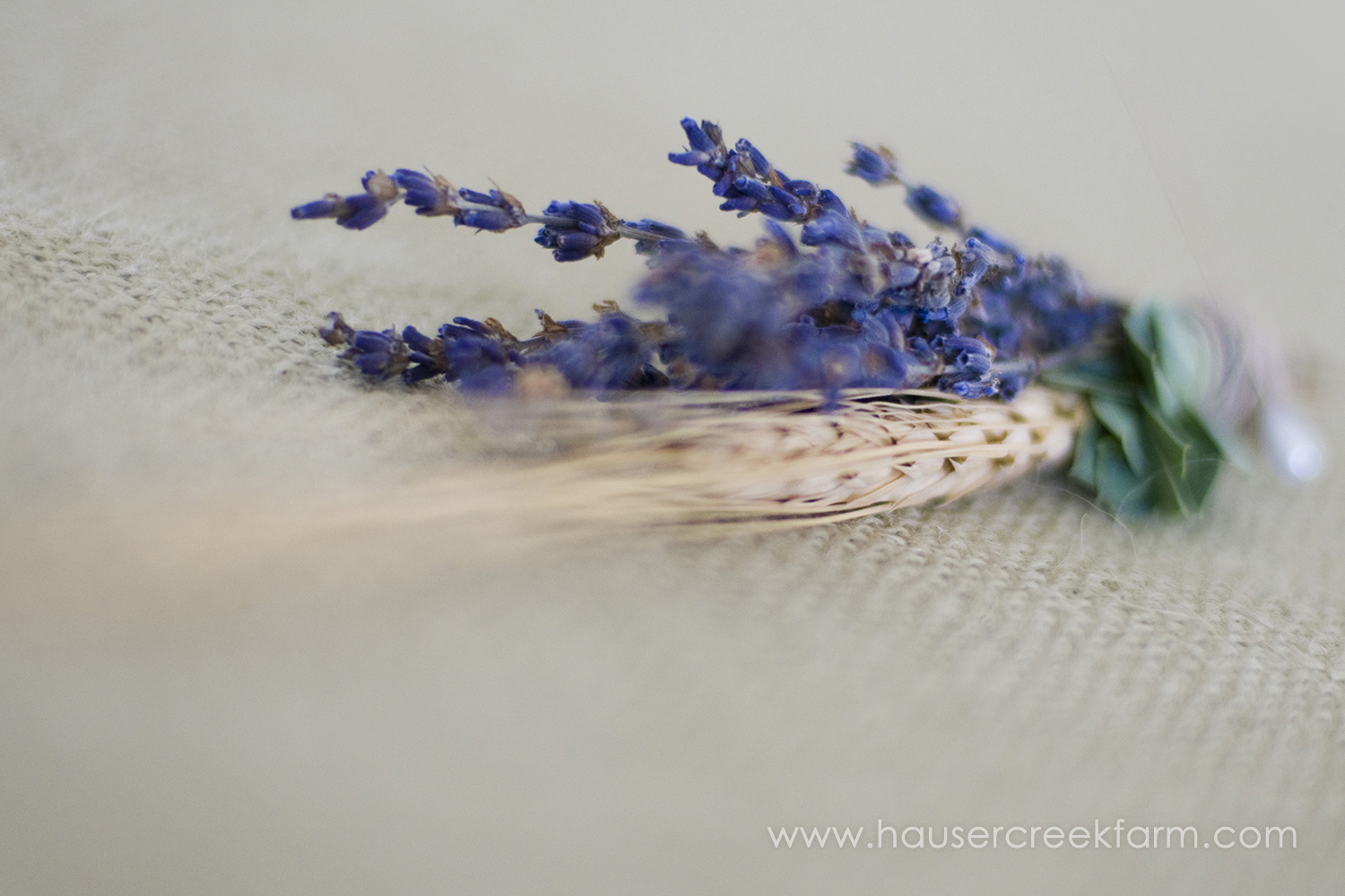 a-photo-of-lavender-by-ashley-03-bundle-froom-hauser-creek-farm.jpg