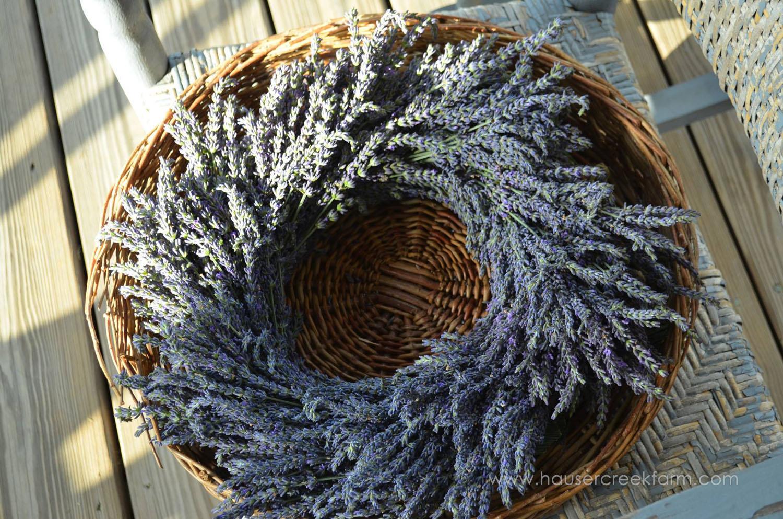 lavender-at-hauser-creek-farm-nc-also-seen-on-facebook-042.jpg