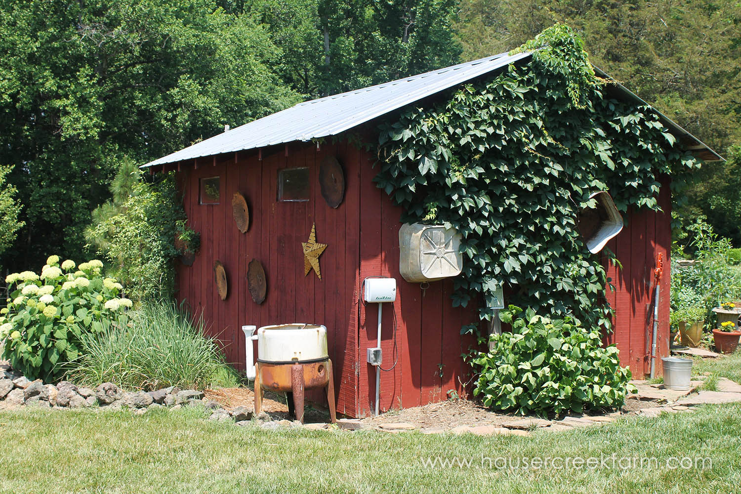 Small red barn with Boston Ivy surrounded by antiques pieces and green plants