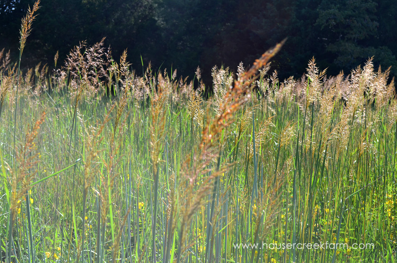 sept bluestem grass 001.JPG